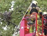 Kat wordt na twee dagen uit boom gered door brandweer