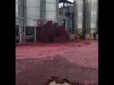 50.000 litres de vin rouge s'écoulent d'une cuve en Espagne