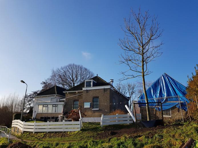 De nieuwe walnotenboom bij het gemaal in de Commandeurspolder in Maasland