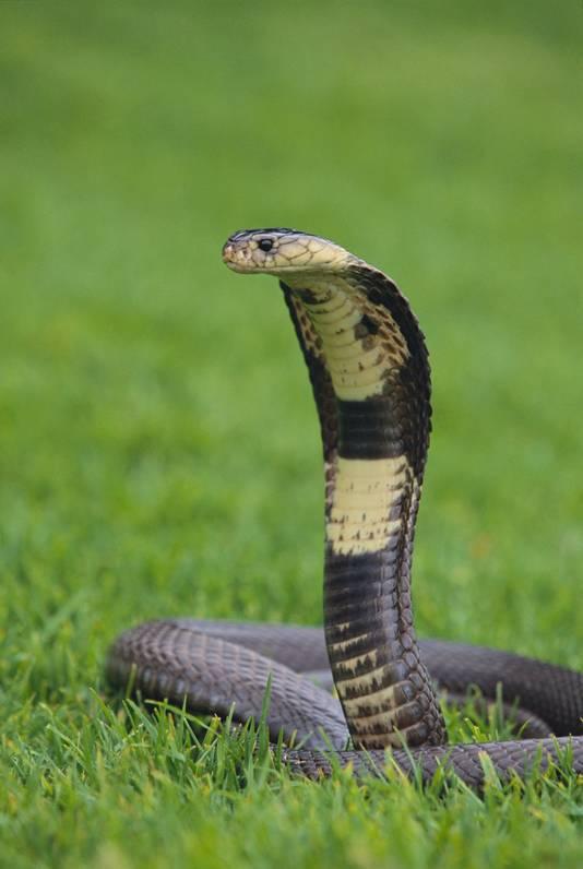 Een giftige slang wilde ze wel eens aanraken.