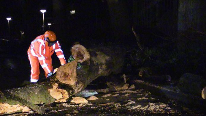 De omgevallen boom in Glanerbrug wordt in stukken gezaagd.