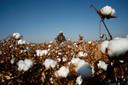 Franse aanklagers zijn een onderzoek begonnen naar grote modeconcerns die mogelijk gebruikmaken van katoen uit de Chinese regio Xinjiang.