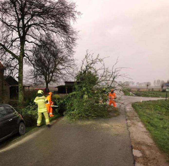 De storm zorgde hier en daar voor een omgevallen boom.