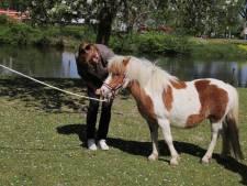 De Kiboehoeve is een pony rijker, mogelijk zelfs twee