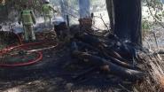 Brandweer blust felle buitenbrand in Zandbergen