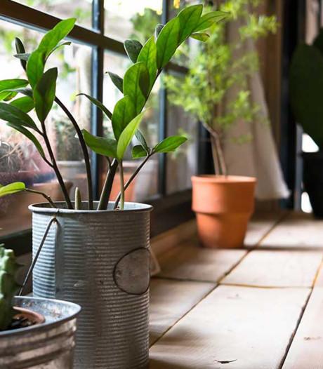 Haal eens een plantje van een psychiatrische patiënt in huis