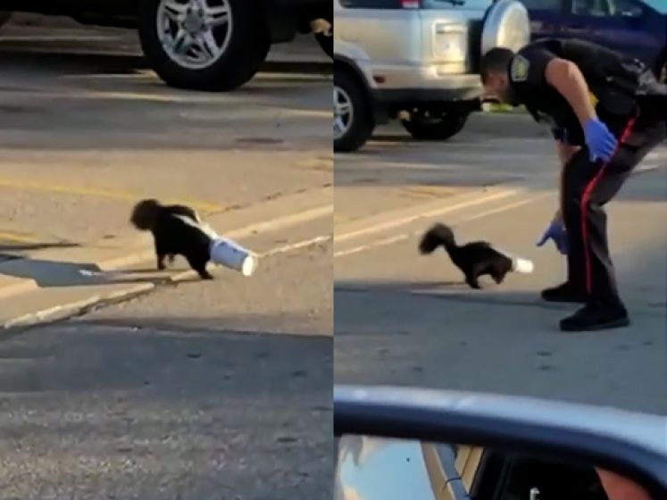 Stinkdier zit vast in McFlurry-beker, agent snelt te hulp