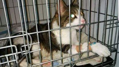 Kattenhater langs Grote Steenweg? Eén dier gestorven, tweede ternauwernood gered