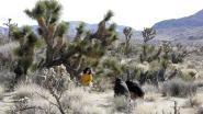 Joshua Tree Nationaal Park in Amerika sluit toch nadat vandalen de beroemde bomen omzagen