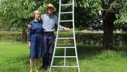 """""""Als het zo doorgaat vrees ik voor de toekomst van kersenbomen"""": Fruitboer Pajottenlander vreest voor aanhoudende droogte"""