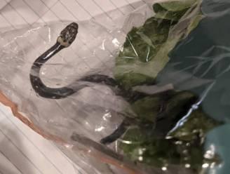 Australisch koppel vindt giftige slang tussen sla van de Aldi