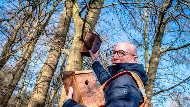 Mees moet de eikenprocessierups ook in Oisterwijk aan gaan vallen: burger wacht niet op gemeente
