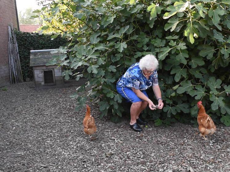 Gré heeft een kip die steeds meer op een haan lijkt