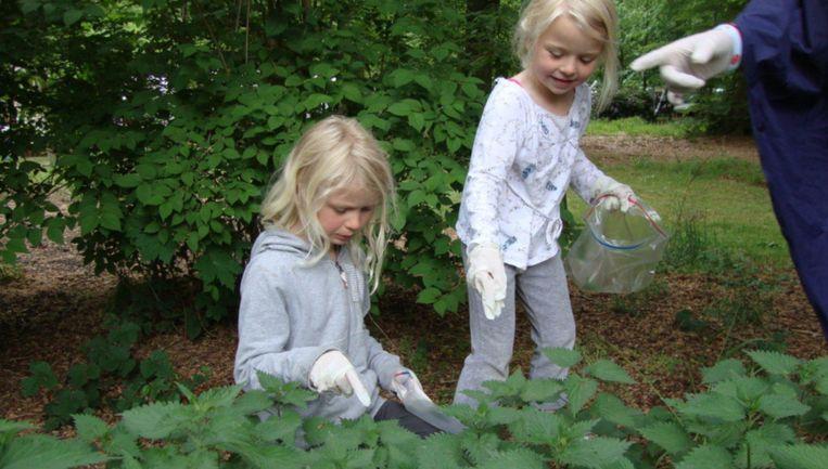 Eetbare planten zoeken op de Zuidas Beeld Ellen Mookhoek