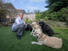 Als Hengelo hondenbelasting afschaft, wat moet er dan omhoog? De onroerendezaakbelasting?