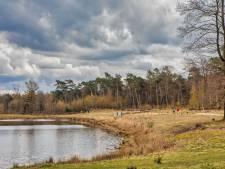 Ingreep Staatsbosbeheer: runderen terug in bossen Dorst