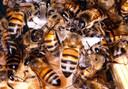 De honingbijen komen in twee bijenkasten op het zonneterras van residentie Budalys.