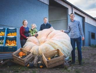 Wat begon als wedstrijdje met buurman leidt tot grootste pompoen van België: Mathias Willemijns kweekt klepper van 1.024,5 kilo en 6 meter omtrek
