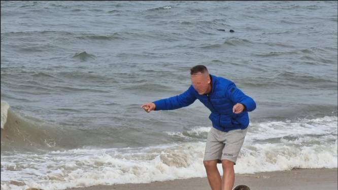 Des touristes harcèlent des phoques sur la plage