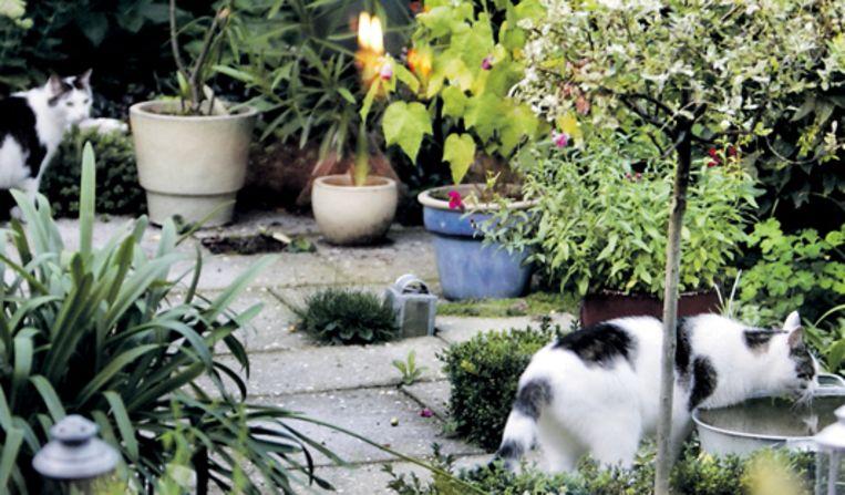 Katten in een tuin in Utrecht. (Jörgen Caris) Beeld