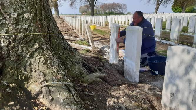 Bomen op oorlogskerkhof duwen grafstenen weg: graven krijgen nieuwe fundering