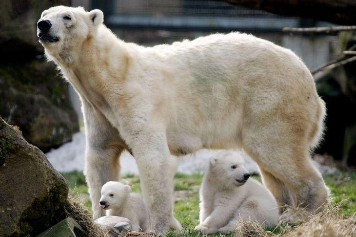 Foto ter illustratie. Dit is niet de ijsbeer uit het verhaal.