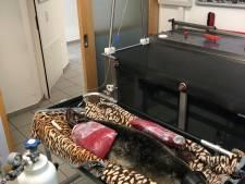 Tiergarten Kleef: zes weken oud zeehondje Carmen stierf aan hartfalen