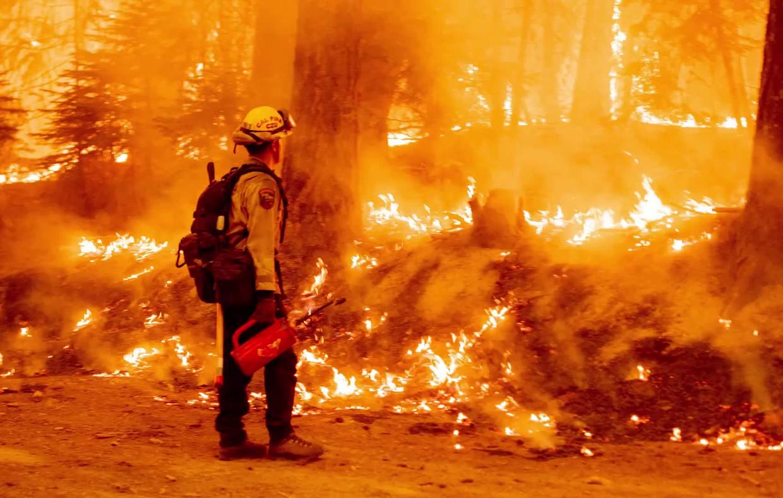 Bosbranden in Californië. Beeld rv