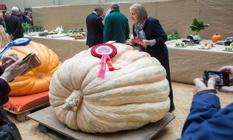 Deze reuzenpompoen heeft de eerste prijs gewonnen op de Harvest Festival Show in Londen. <br /><br /> Beeld David Levene