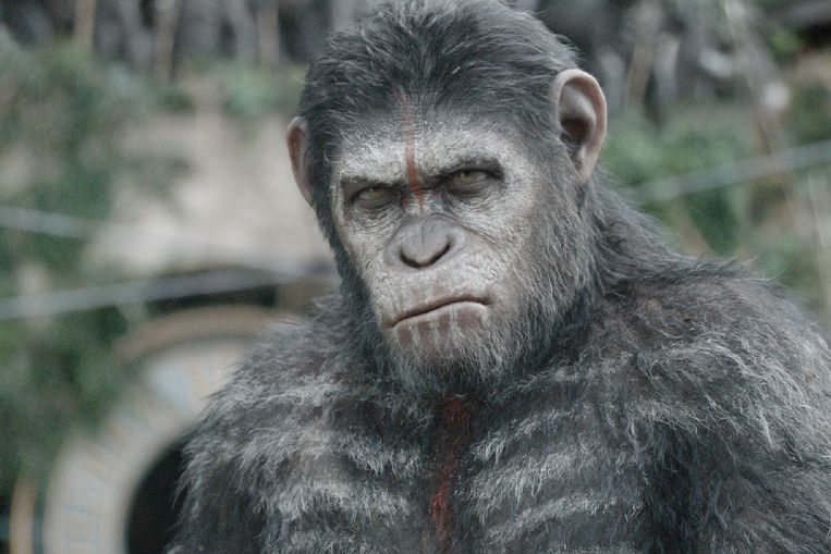 PLANET OF THE APES Beeld Disney+