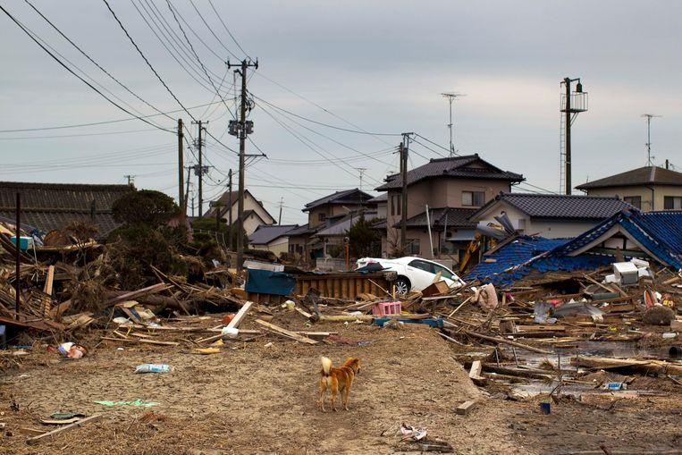 Minamisoma, de woonplaats van Seiju Nambara en zijn gezin, in april 2011, een maand na de tsunami. Beeld David Guttenfelder / AP