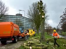 Gemeente verwijdert 645 bomen voor veiligheid