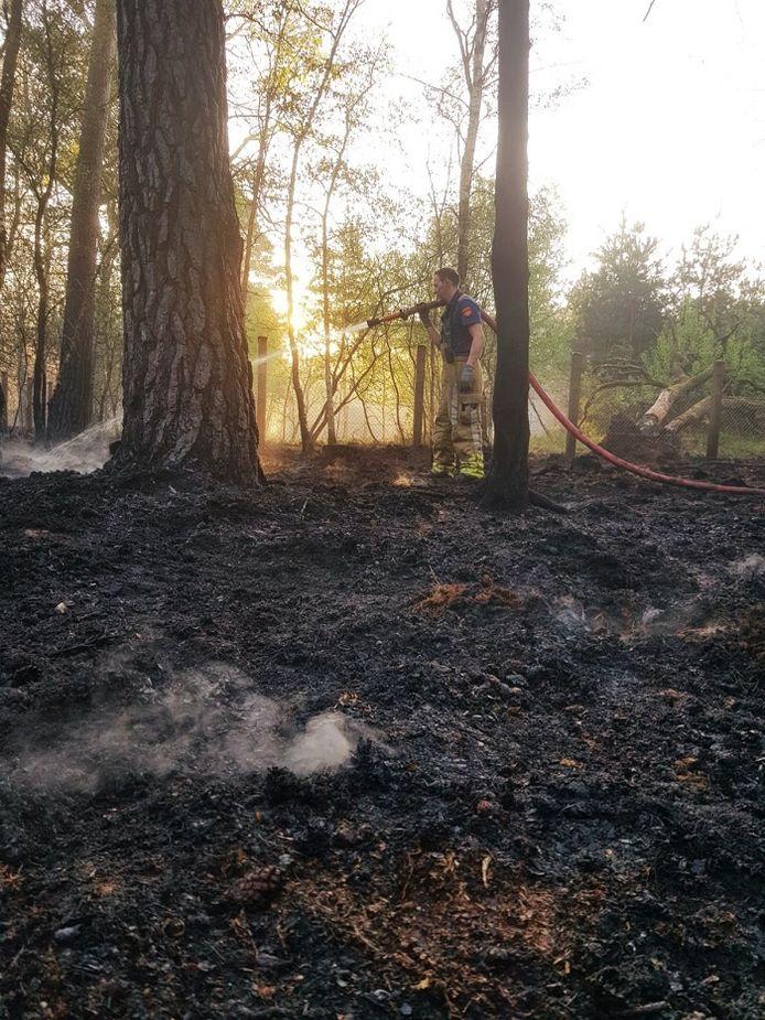 De brandweer van Belfeld is bezig met het afblussen in Nationaal Park De Meinweg in Herkenbosch.