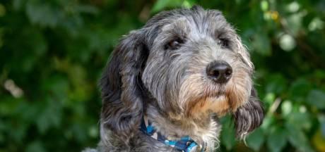 Eindelijk: asielhond Tess uit Eindhoven heeft een nieuw baasje, na hoog opgelopen adoptiestrijd