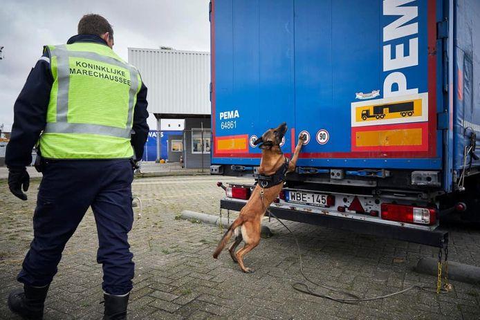 Een speurhond slaat aan op een vrachtwagen in Hoek van Holland.
