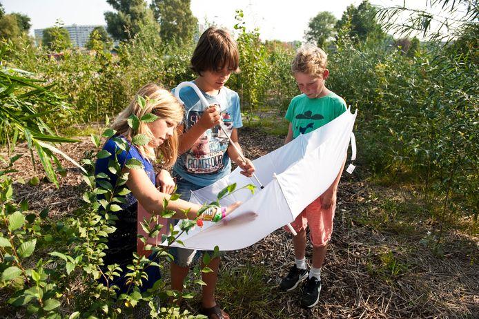 Wat is de waarde van een tiny forest? De gemeente Apeldoorn ziet het vooral als een mooi middel om natuur bij kinderen te brengen.