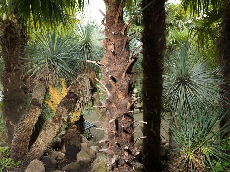 Amsterdamse Palmentuin op de Westelijke Eilanden doet denken aan verre vakanties. Beeld Ivo van der Bent