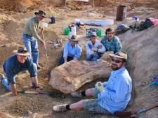 Nieuwe enorme dinosaurussoort ontdekt in Australië: 6,5 meter hoog en 30 meter lang