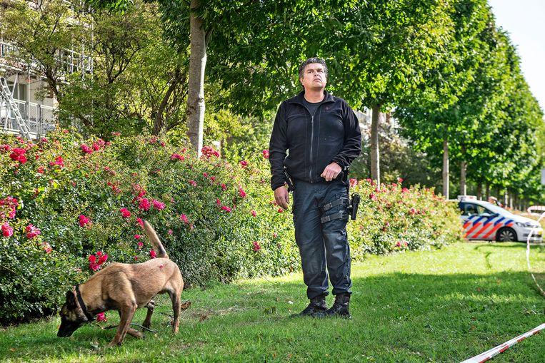Een rechercheur en zijn hond doen sporenonderzoek in de buurt van de plek waar Wiersum is doodgeschoten. Beeld Guus Dubbelman / de Volkskrant