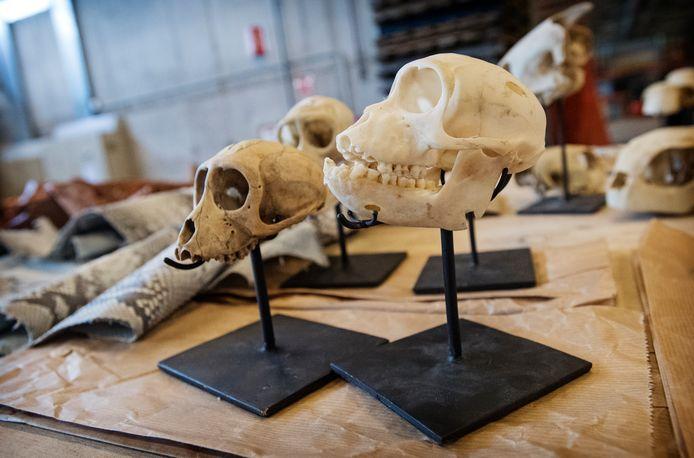 Een deel van de inbeslaggenomen schedels en andere dierproducten