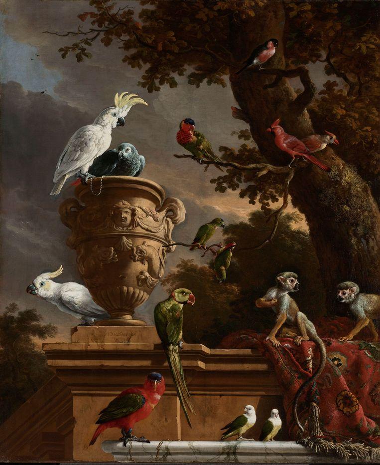 De menagerie, Melchior d'Hondecoeter. Beeld Rijksmuseum, Amsterdam