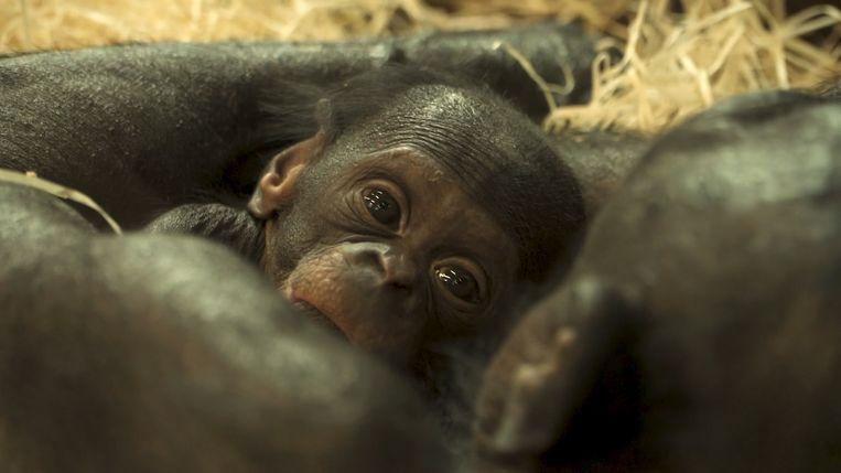 null Beeld Zoo Planckendael