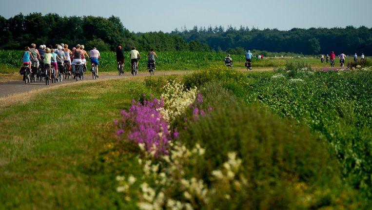 Deelnemers aan de Fietsvierdaagse rijden door het Drentse landschap in de omgeving van Westerbork. Beeld anp