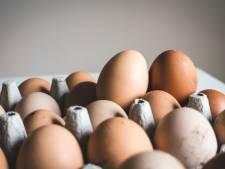 Einde aan lange reeks eiergooi-incidenten in Vlaardingen? Politie pakt twee mannen op
