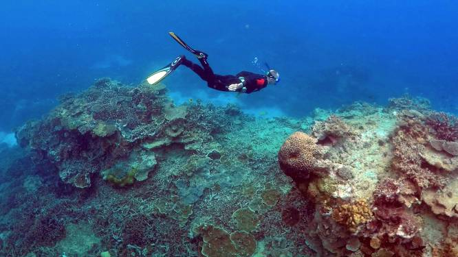 Luidsprekers misleiden vissen en helpen bij het herstel van beschadigd koraal