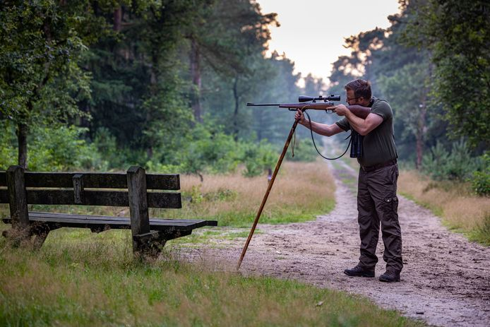 Jager Leendert Houweling heeft een ontheffing om te jagen. Daarin staat hoeveel biggen, overlopers, zeugen en keilers in zijn jachtveld geschoten moeten worden.