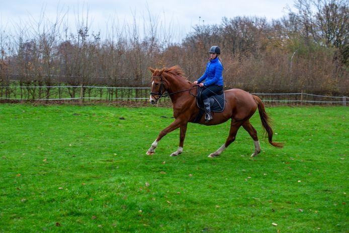 Sacha in betere tijden, als energiek rijpaard bij De Gravenruiters.