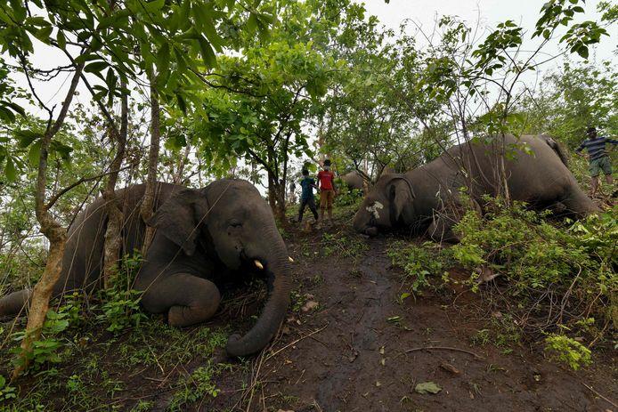 Op een heuvel in het Kundoli-reservaat werden veertien olifanten gevonden, elders nog eens vier.