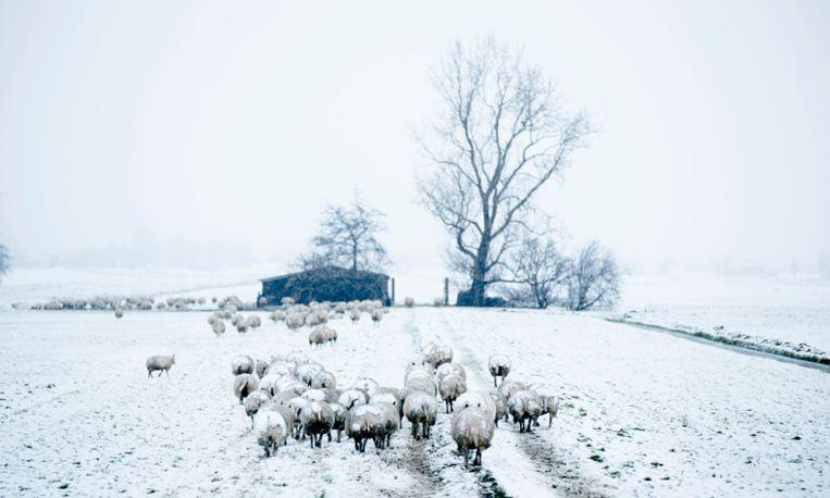 Handschoenen paraat: morgen kans op sneeuw!
