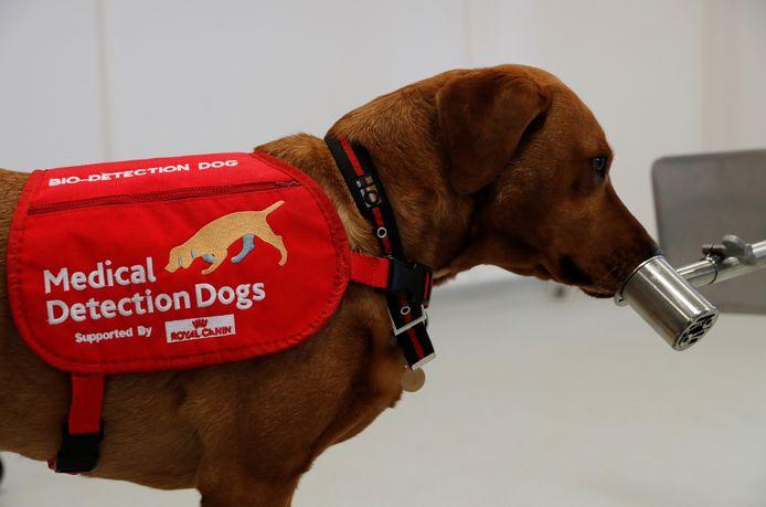 Hond Floris krijgt een 'geurtraining'.